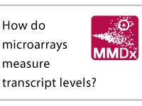 How do microarrays meausure transcript levels